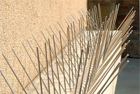 Bird Proofing Spikes