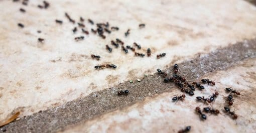 Crawling Insect Control in Suffolk